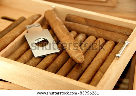 Collection of cigars in open humidor. Close-up.