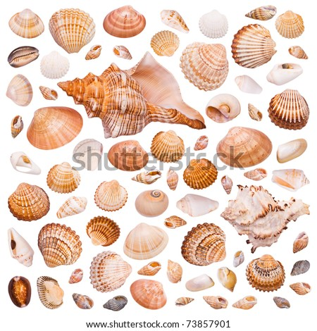 Collection of cockleshell on the white background