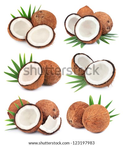 Collection of coconuts fruit with leafs on white close up