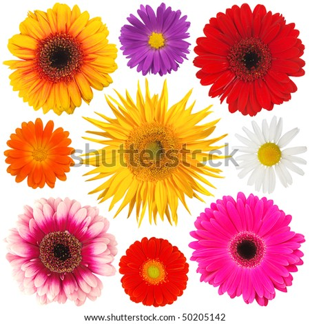 Collection of colored blooms isolated on white