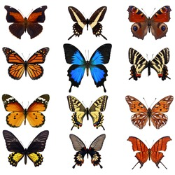Collection of colorful butterfly isolated on white background.