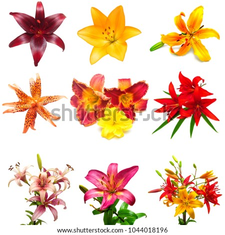collection of colorful flowers...