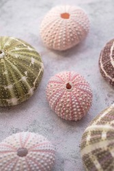 collection of colourful sea urchins