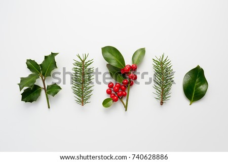 Collection of decorative Christmas plants with green leaves and holly berries.  #740628886