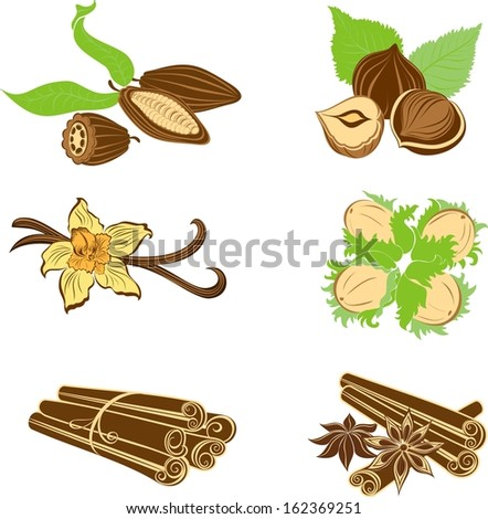 Collection of dessert ingredients. Hazelnuts, Cocoa beans, Vanilla pods, Anise, and Cinnamon isolated on white