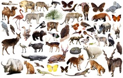 collection of different birds, mammals and reptiles from asia isolated on white background