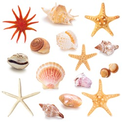 Collection of different seashells . Isolated on white background.
