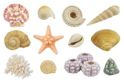Collection of different seashells, sea urchins and red starfish isolated on white background