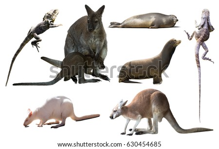 collection of different wild Australian birds, mammals and reptiles isolated on white background