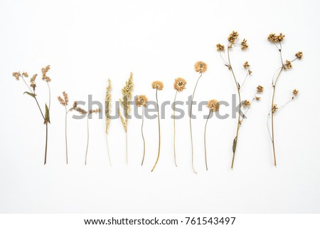 collection of dried flower plant on isolated background