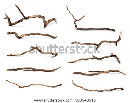 Collection of dry twigs isolated on white background. #303543515