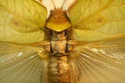 Collection of exotic insects. Entomology.