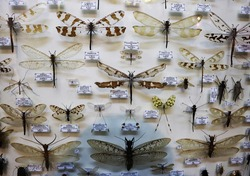 Collection of exotic insects. Entomology. Pharmaceutical garden, Moscow, Russia.