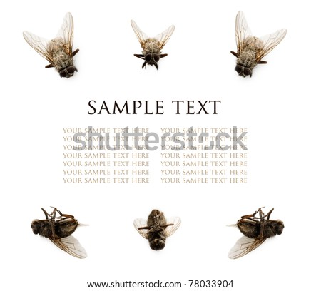 Collection of flies isolated on white background with sample text. Perfect picture for advertising insect repellents.