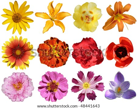 collection of flowers isolated on white background