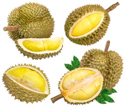 Collection of Fresh durian with leaf isolated on white background, Durian fruit isolated on white background With clipping path