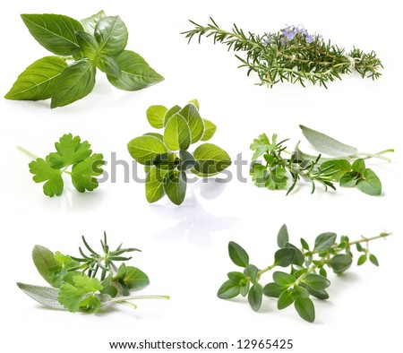 Collection of fresh herbs, isolated on white.  XXL file.  Please see individual images in my gallery.