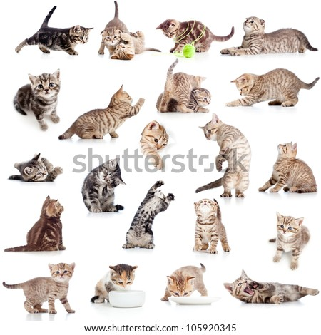 collection of funny playful cat kitten isolated on white background