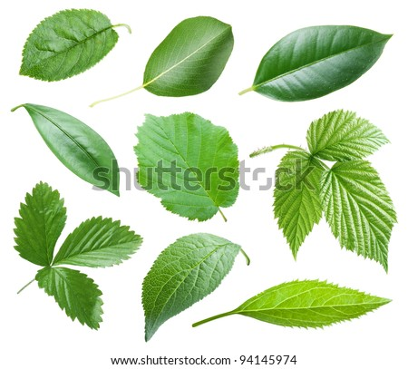 Collection of garden leaves on white background