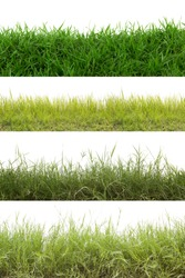 Collection of grass isolated on white background.