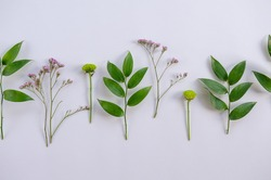 Collection of green plant branches with leaves and herbs on white background. Idea for herbarium, scientific study, eco trend photo. Simple and beautiful picture, nothing extra.