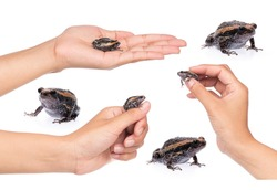 Collection of hand holding Frog isolated on white background.