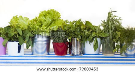 collection of herbs in pots