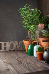 Collection of home flowers and succulent plants in different pots. Steam compact air humidifier. Idea Home Garden.