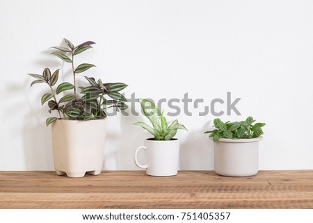 Collection of houseplant on wooden table in room #751405357