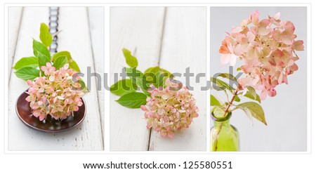 Collection of hydrangea flowers in spa style. selective focus