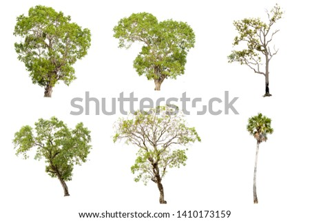 Collection of isolate pictures of green tree. Large perennial on white background. tree dicut at isolated. Beautiful green trees in Thailand Used for teaching biology of plants. #1410173159