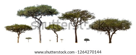 Photo of  Collection of isolated African Acacia trees extracted and isolated on white background for compositing
