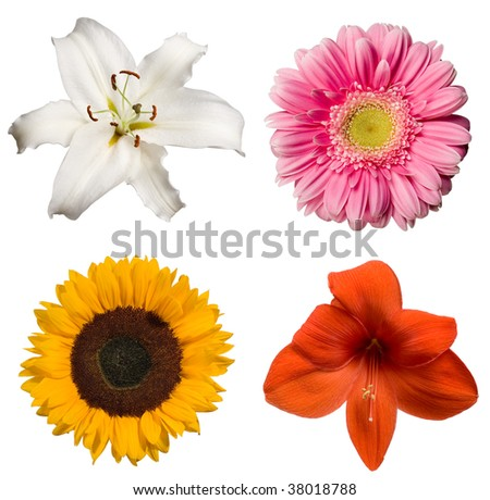 Collection of isolated flowers