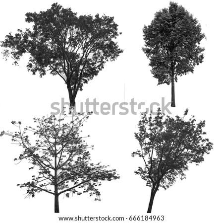 Collection of isolated tree ob white background #666184963