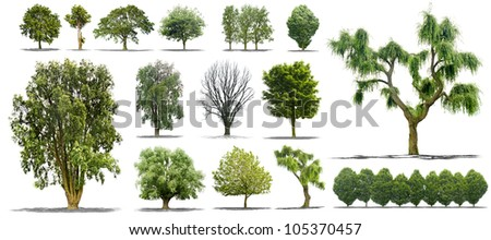 collection of isolated tree on a white background in high definition