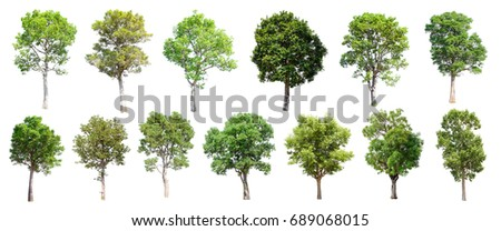 Collection of Isolated Trees on white background  - Shutterstock ID 689068015