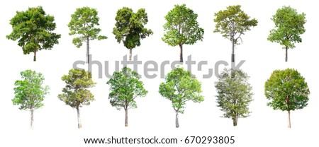 Collection of Isolated Trees on white background , A beautiful trees from Thailand , Suitable for use in architectural design , Decoration work ,  Used with natural articles both on print and website. - Shutterstock ID 670293805