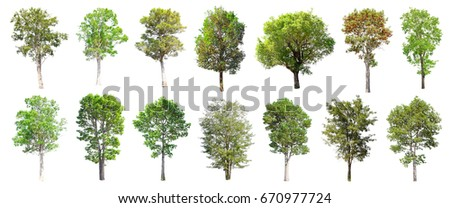 Collection of Isolated Trees on white background , A beautiful trees from Thailand , Suitable for use in architectural design , Decoration work ,  Used with natural articles both on print and website. - Shutterstock ID 670977724