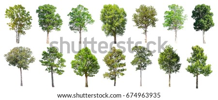 Collection of Isolated Trees on white background , A beautiful trees from Thailand , Suitable for use in architectural design , Decoration work ,  Used with natural articles both on print and website. #674963935