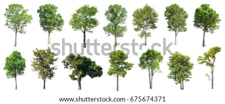 Collection of Isolated Trees on white background , A beautiful trees from Thailand , Suitable for use in architectural design , Decoration work ,  Used with natural articles both on print and website. - Shutterstock ID 675674371