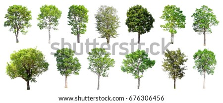 Collection of Isolated Trees on white background , A beautiful trees from Thailand , Suitable for use in architectural design , Decoration work ,  Used with natural articles both on print and website. - Shutterstock ID 676306456