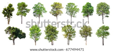 Collection of Isolated Trees on white background , A beautiful trees from Thailand , Suitable for use in architectural design , Decoration work ,  Used with natural articles both on print and website. - Shutterstock ID 677494471