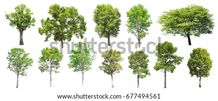 Collection of Isolated Trees on white background , A beautiful trees from Thailand , Suitable for use in architectural design , Decoration work ,  Used with natural articles both on print and website. - Shutterstock ID 677494561