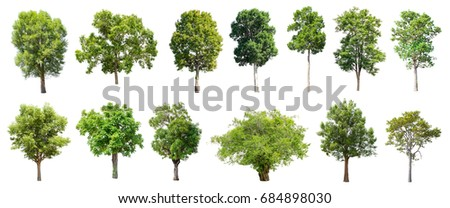 Collection of Isolated Trees on white background , A beautiful trees from Thailand , Suitable for use in architectural design , Decoration work , Used with natural articles both on print and website. - Shutterstock ID 684898030
