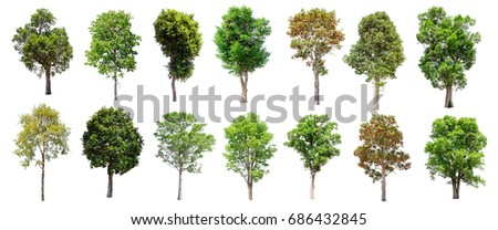 Collection of Isolated Trees on white background , A beautiful trees from Thailand , Suitable for use in architectural design , Decoration work , Used with natural articles both on print and website. - Shutterstock ID 686432845