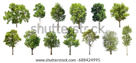 Collection of Isolated Trees on white background , A beautiful trees from Thailand , Suitable for use in architectural design , Decoration work , Used with natural articles both on print and website. - Shutterstock ID 688424995