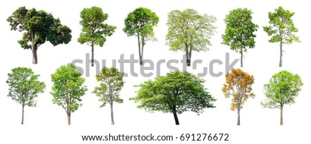 Collection of Isolated Trees on white background , A beautiful trees from Thailand , Suitable for use in architectural design , Decoration work , Used with natural articles both on print and website. #691276672