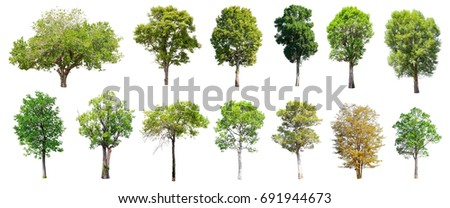Collection of Isolated Trees on white background , A beautiful trees from Thailand , Suitable for use in architectural design , Decoration work , Used with natural articles both on print and website. #691944673