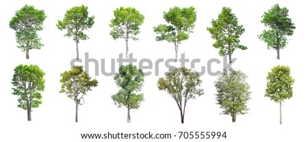 Collection of Isolated Trees on white background , A beautiful trees from Thailand , Suitable for use in architectural design , Decoration work , Used with natural articles both on print and website. - Shutterstock ID 705555994