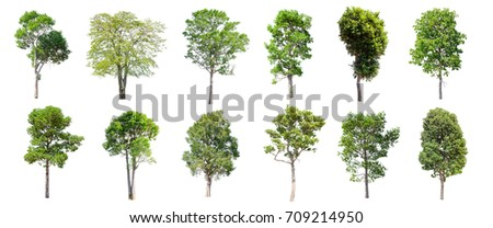 Collection of Isolated Trees on white background , A beautiful trees from Thailand , Suitable for use in architectural design , Decoration work , Used with natural articles both on print and website. - Shutterstock ID 709214950
